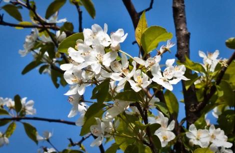 Hwamyeong Arboretum White Flowers